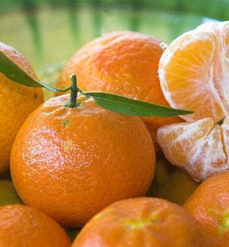 cómo germinar semillas de mandarina