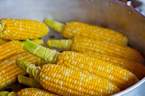 plagas del maíz y su control